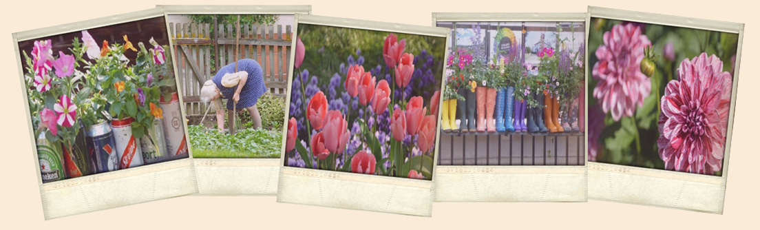 Garten Polaroids